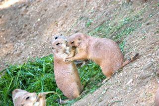 Zoo near Lake Balaton Veszprem