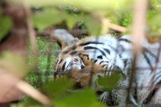 montpelier zoo