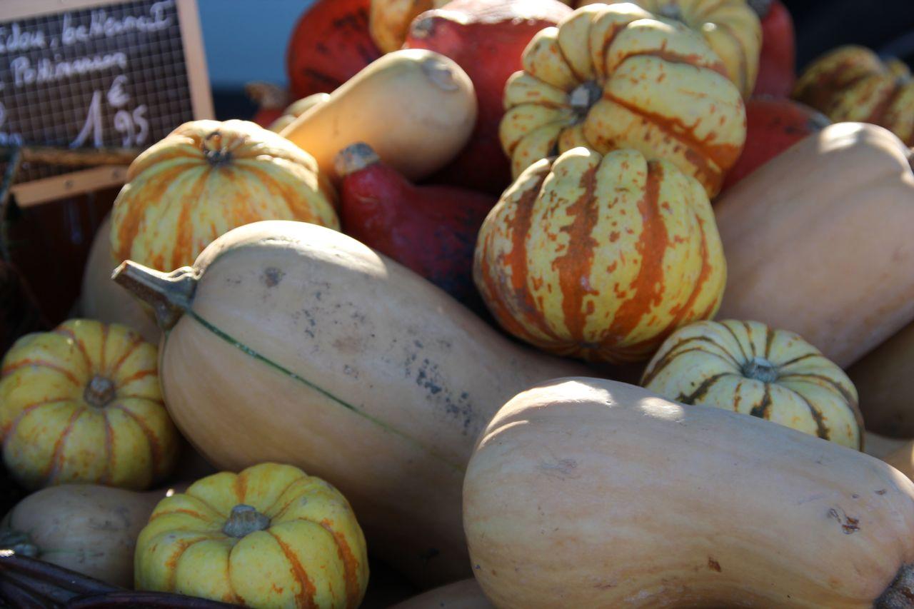 harvest pumpkins autumn