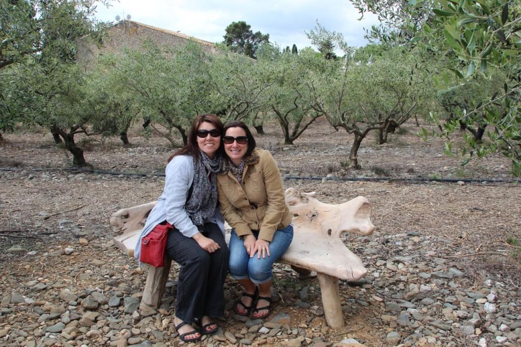 Olive tree bench