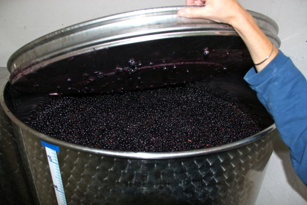 last week grapes are already fermenting