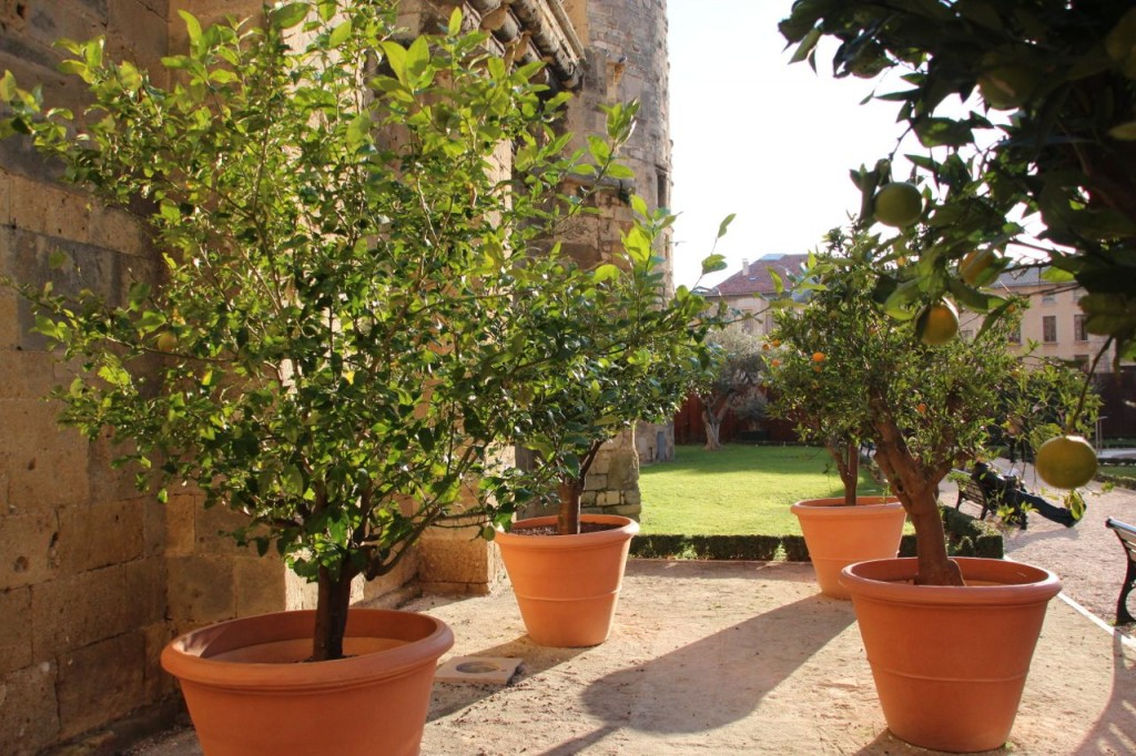 Narbonne Cathedral Gardens