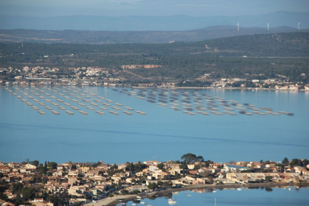Oyster and Mussel Farms in Sete