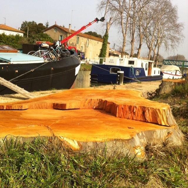 Plane trees Canal du Midi