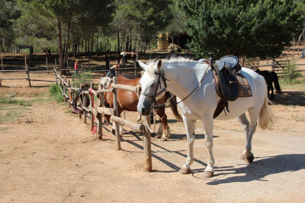 Horseback riding near Capestang