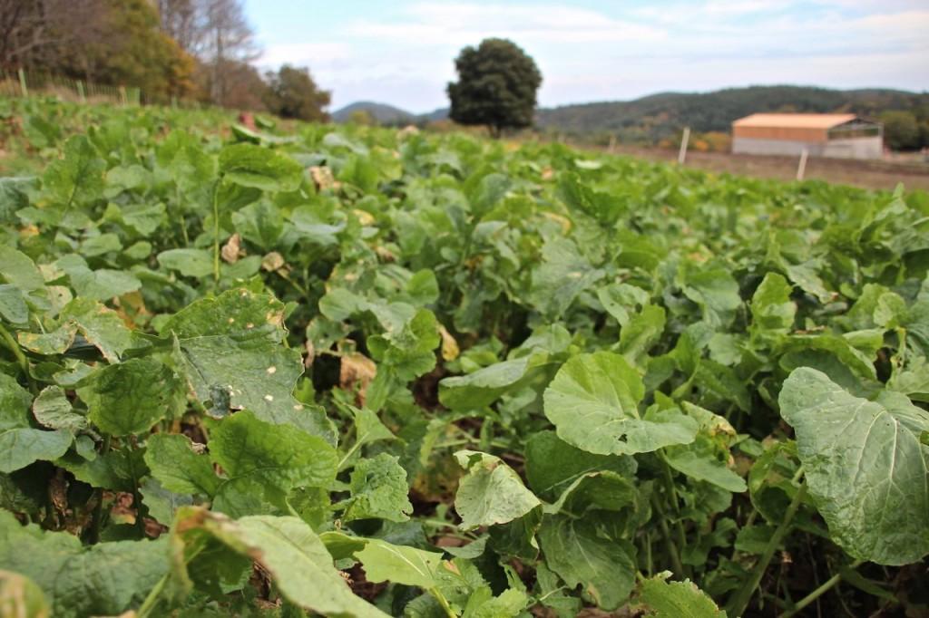 Navet farm 3