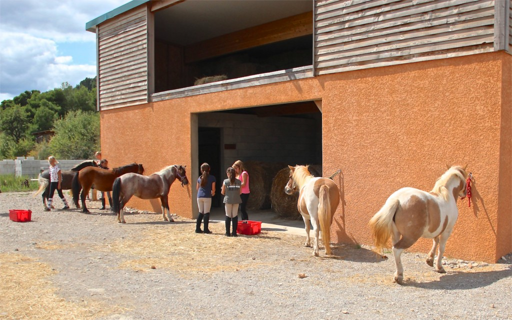 Angelina spends her first days with the ponies
