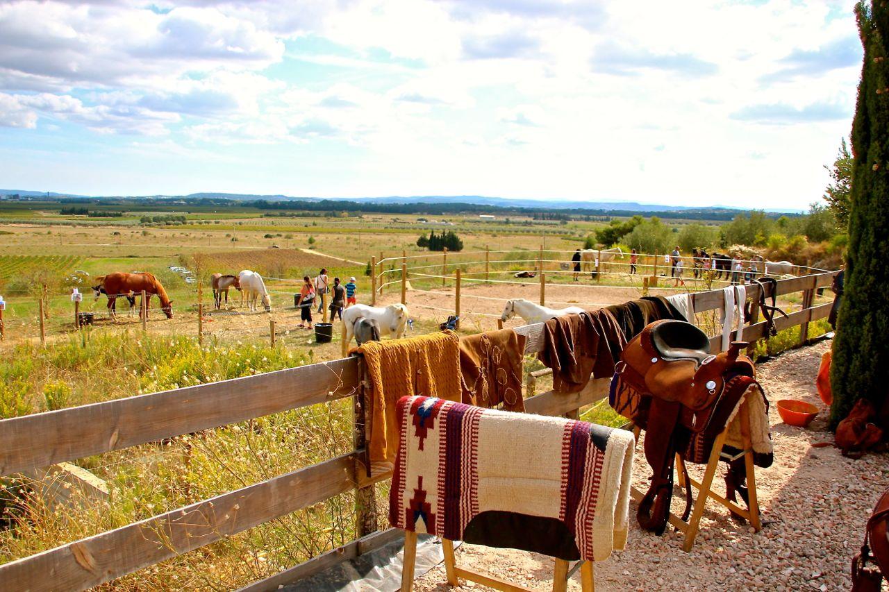 Typical ranch day -La Fount Del Bosc - Argeliers