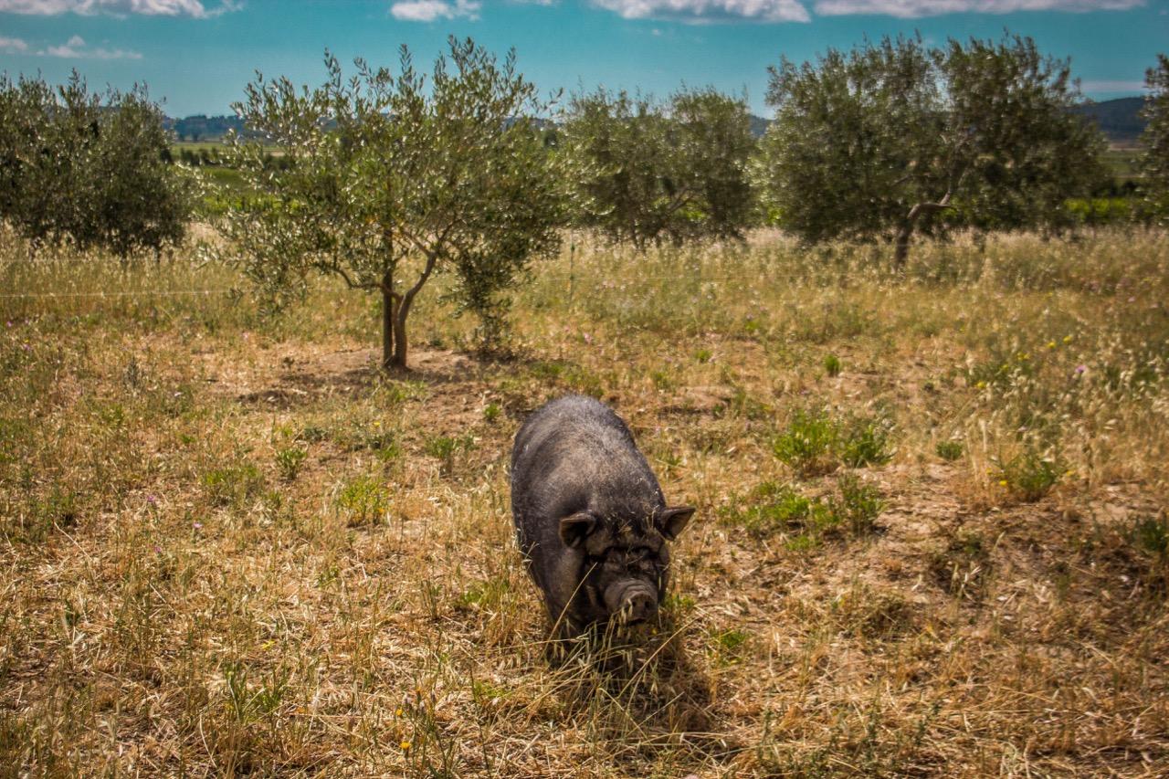 farm gite rental southern France