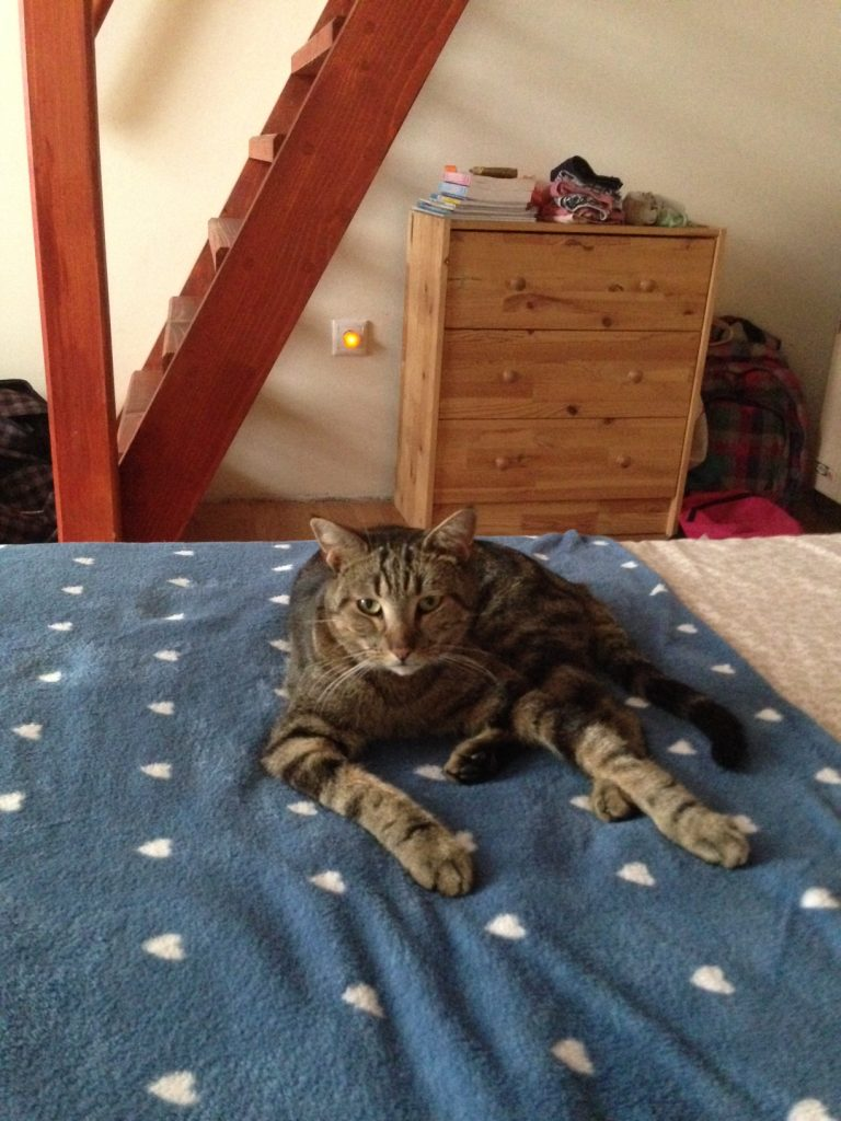 Elvis, Hamori cat moves to Budapest